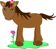 Pony with a Flower Royalty Free Stock Image