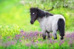 Pony In Flowers foto de archivo libre de regalías