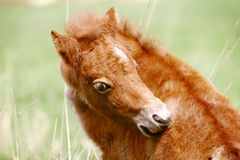 Pony foal. Of few days old Stock Photo