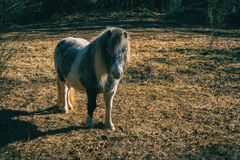 A pony in the forest stock image