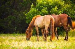 Pony Friends Photos libres de droits
