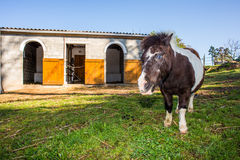 Pony in front of stables Stock Image