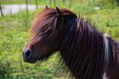 A Pony full of Flies. A simple portrait of a Pony with a bunch of flies all over his face stock photo
