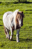 Pony. In a garden it´s a vertical picture Royalty Free Stock Photography