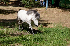 Pony is grazed on tourist base. Pony as the representative of fauna, is grazed on a lawn on tourist base Royalty Free Stock Image