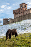 A pony grazes in the garden of the castle of montenovo Stock Photos