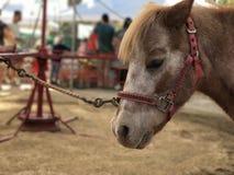Pony Harnessed till en Pony Ride Wheel på en festival Royaltyfri Bild