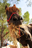 Pony and hay Stock Photo