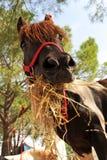 Pony and hay Stock Photo