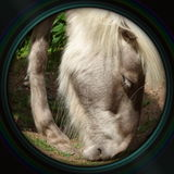 Pony head closeup in objective lens Stock Photos