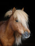Pony Head Shot Fotografia Stock