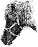 Pony head Stock Photography