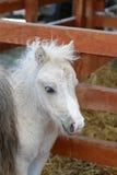 Pony horse Stock Photos