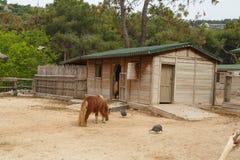 Pony Horse View Immagine Stock Libera da Diritti