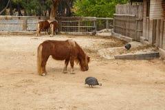 Pony Horse View Photo libre de droits