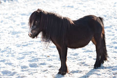 Pony horse in winter Stock Photos