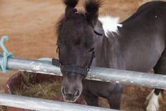 Pony im Schutz Lizenzfreies Stockbild