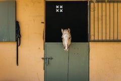 Pony im Stall lizenzfreie stockfotografie