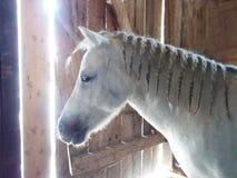Pony im Stall stockfoto