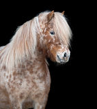 Pony isolated on black Royalty Free Stock Photo