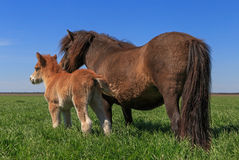 Pony with kid. On meadow Royalty Free Stock Photo