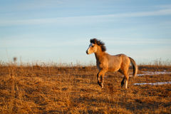 Pony Stock Photography