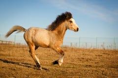 Pony Stock Image