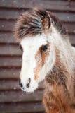 Pony Stock Images