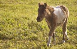 Pony litter Stock Photo