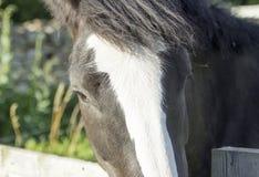 Pony Looking au-dessus d'une barrière Photographie stock