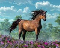 Pony in Meadow stock illustration