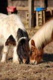 Pony-Mittagessen-Datum Stockbild