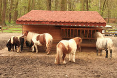 Pony nahe ihrem Stall lizenzfreie stockfotografie