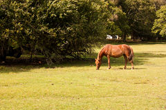 A pony in the New Forest Stock Photos