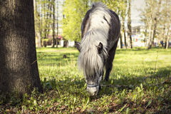 Pony on pasture Royalty Free Stock Photo