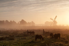 Pony on pasture and windmill in dense sunrise fog Stock Images