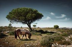 Pony Pasturing imagen de archivo