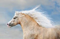 Pony portrait in action Stock Photos