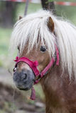 Pony portrait Stock Photo