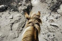 Pony Ride royaltyfri bild