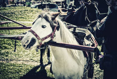 Pony Ride. A pony hitched to a pony wheel waiting to start a pony ride.  Processed to give retro / faded look Royalty Free Stock Images