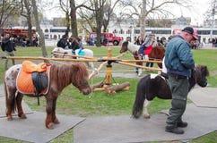 Pony riding Royalty Free Stock Photo