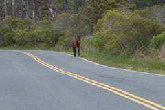 Pony on the Road Royalty Free Stock Image