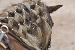 Pony's plait network Stock Photos