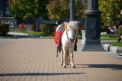 Pony saddled up and waiting Stock Images