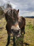 Pony, schönes Tier lizenzfreie stockfotos