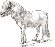 Pony sketch Stock Image