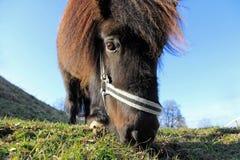 The pony Stock Photo