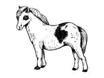 Pony small horse engraving vector Royalty Free Stock Photo