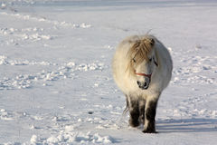 Pony in snow Stock Photos